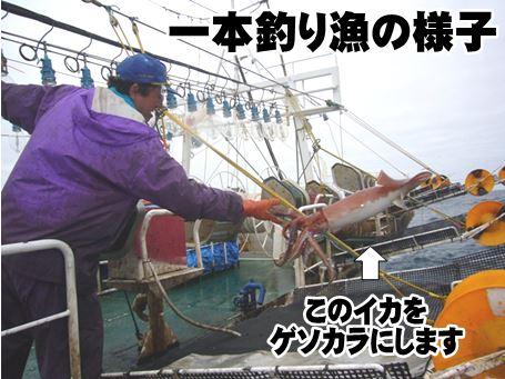 一本釣り漁の様子